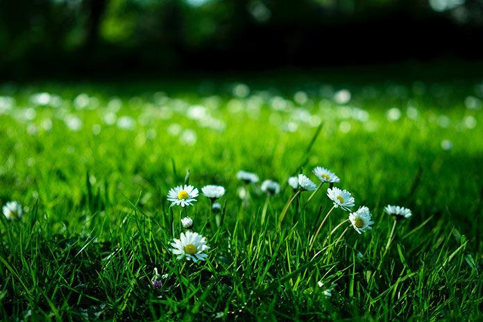 Krótka historia Twojego trawnika