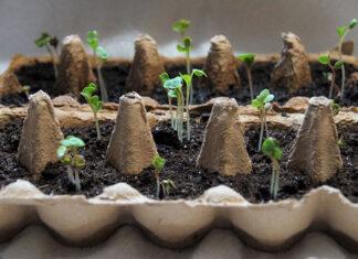 Jak przechowywać nasiona